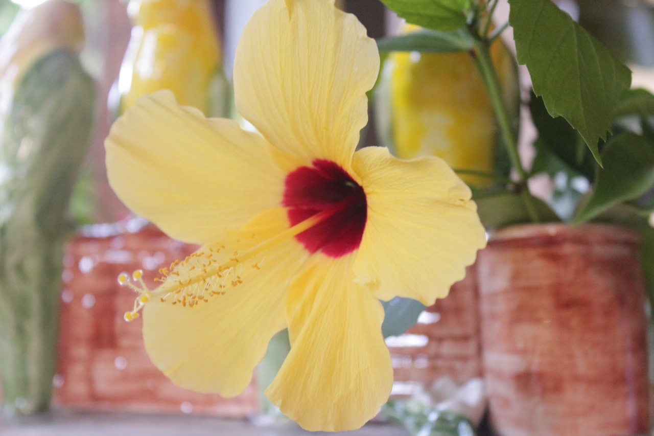 vaso_papagaios_louca_flores_1